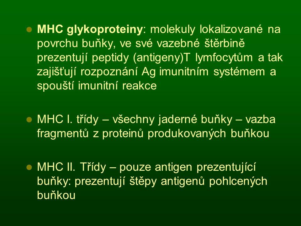 MHC glykoproteiny: molekuly lokalizované na povrchu buňky, ve své vazebné štěrbině prezentují peptidy (antigeny)T lymfocytům a tak zajišťují rozpoznán