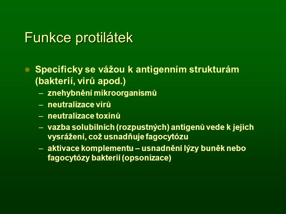 Funkce protilátek Specificky se vážou k antigenním strukturám (bakterií, virů apod.) –znehybnění mikroorganismů –neutralizace virů –neutralizace toxin