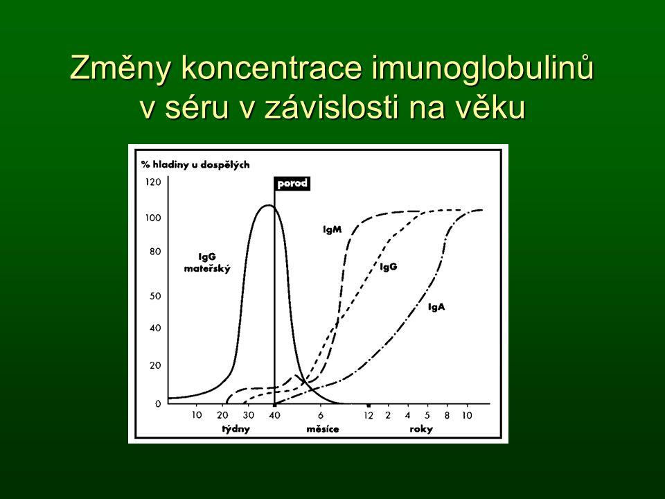 Změny koncentrace imunoglobulinů v séru v závislosti na věku