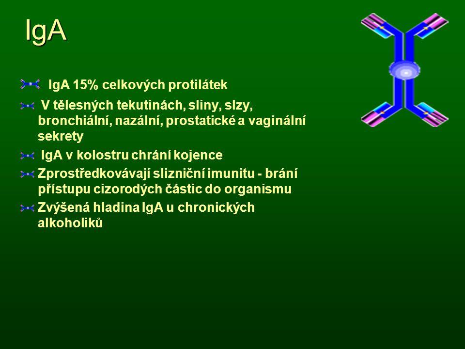 IgA IgA 15% celkových protilátek V tělesných tekutinách, sliny, slzy, bronchiální, nazální, prostatické a vaginální sekrety IgA v kolostru chrání koje