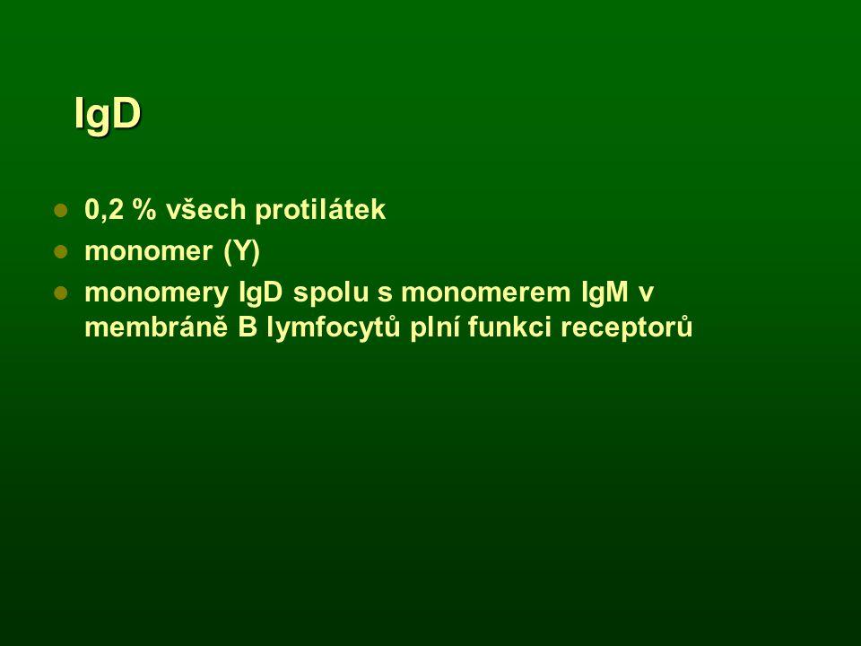 IgD 0,2 % všech protilátek monomer (Y) monomery IgD spolu s monomerem IgM v membráně B lymfocytů plní funkci receptorů
