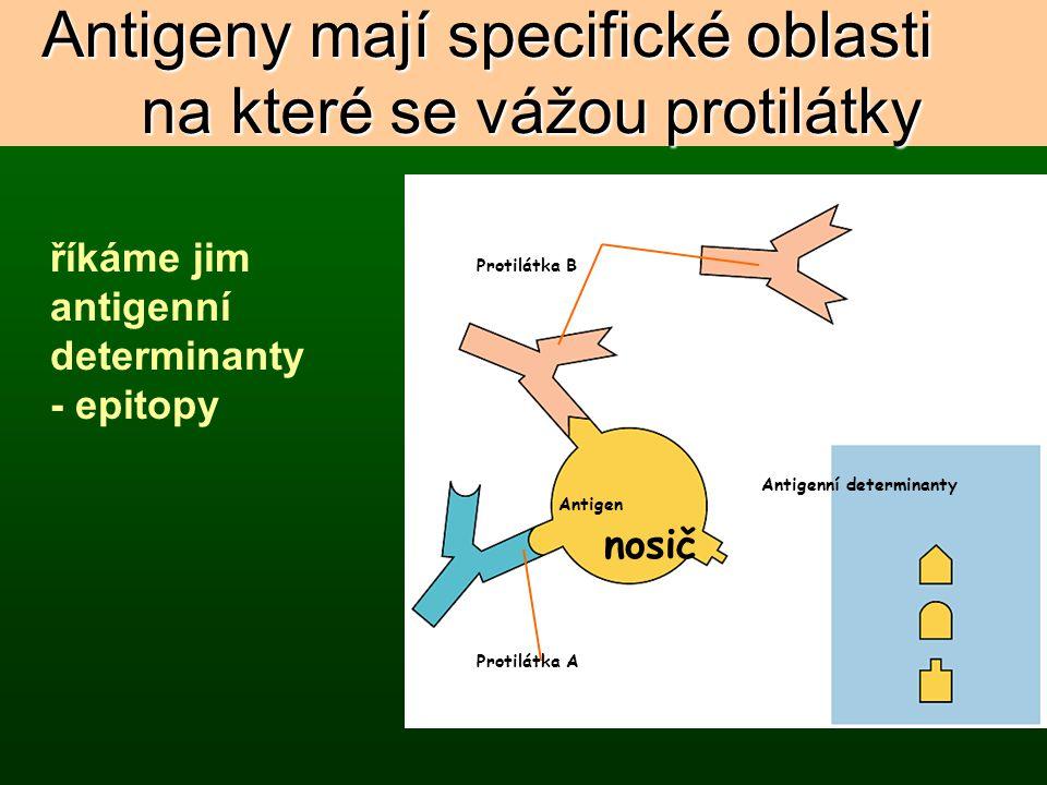 Antigeny mají specifické oblasti na které se vážou protilátky Figure 24.6 Protilátka B Antigen Protilátka A Antigenní determinanty říkáme jim antigenn
