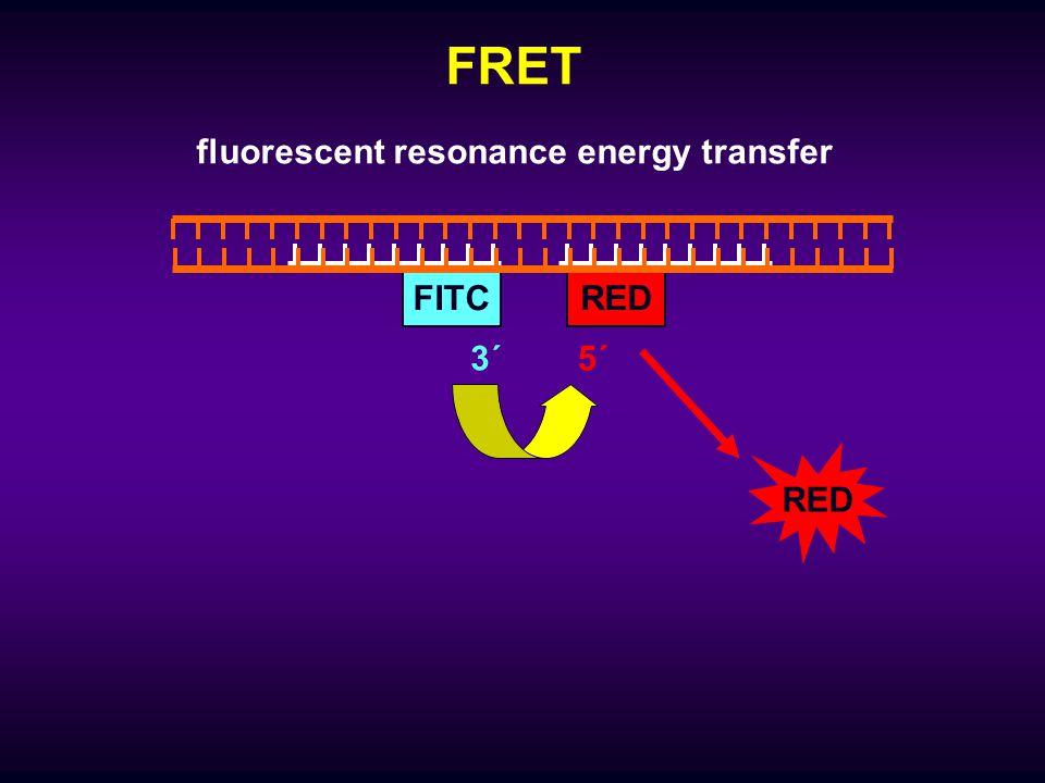 FRET RED fluorescent resonance energy transfer 5´ REDFITC 3´