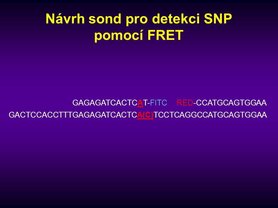 Návrh sond pro detekci SNP pomocí FRET GACTCCACCTTTGAGAGATCACTCA(C)TCCTCAGGCCATGCAGTGGAA GAGAGATCACTCAT-FITCRED-CCATGCAGTGGAA