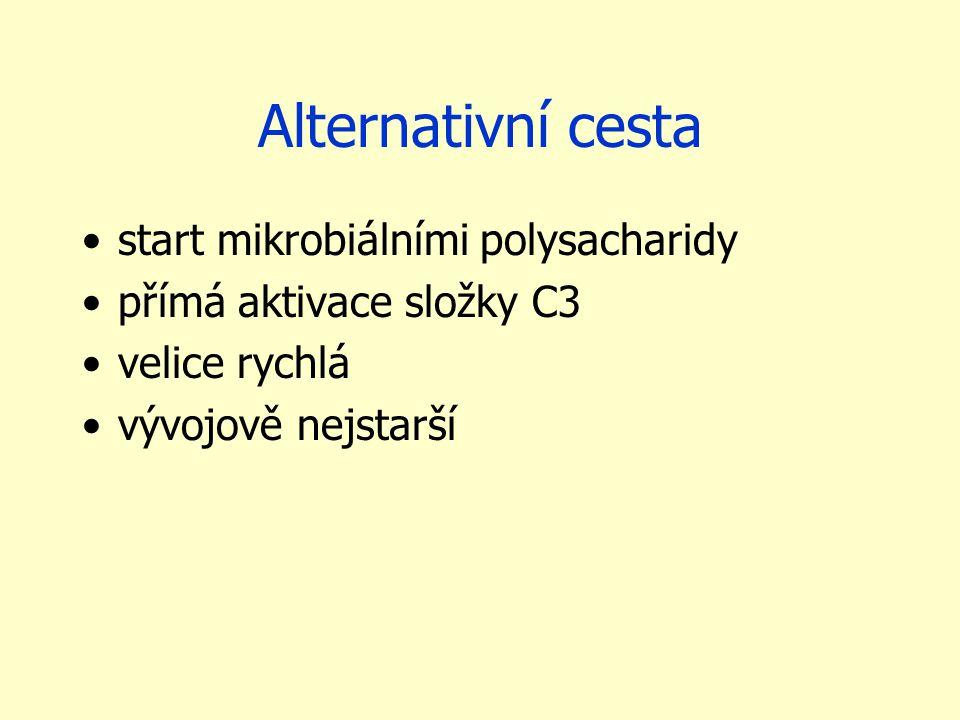 Alternativní cesta start mikrobiálními polysacharidy přímá aktivace složky C3 velice rychlá vývojově nejstarší