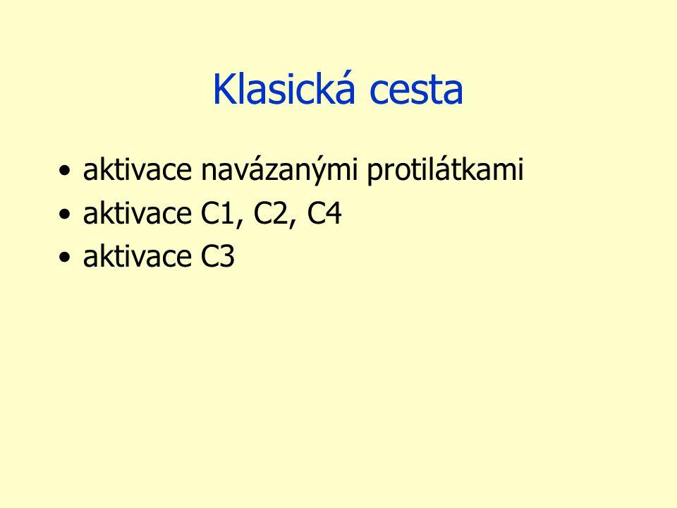 Klasická cesta aktivace navázanými protilátkami aktivace C1, C2, C4 aktivace C3