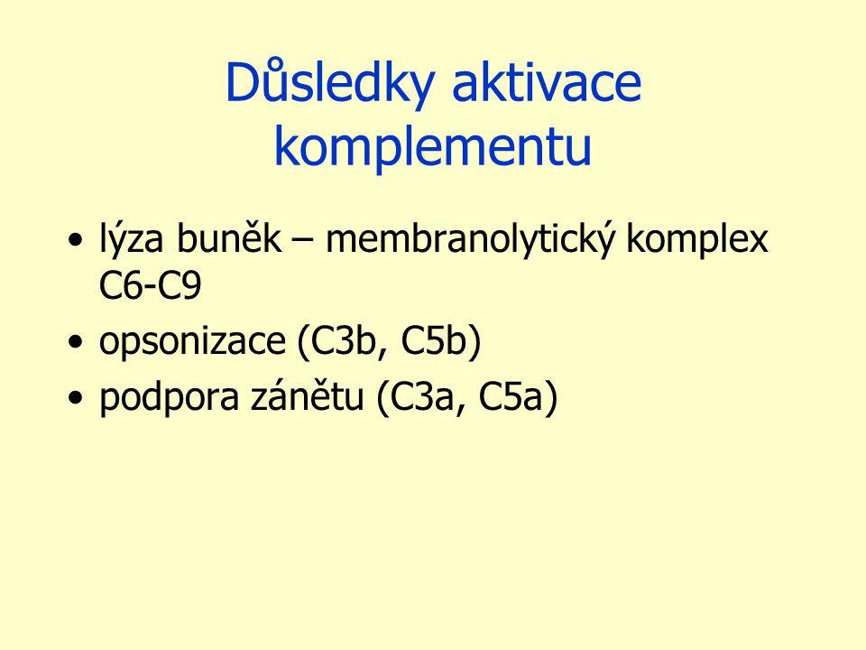 Důsledky aktivace komplementu lýza buněk – membranolytický komplex C6-C9 opsonizace (C3b, C5b) podpora zánětu (C3a, C5a)