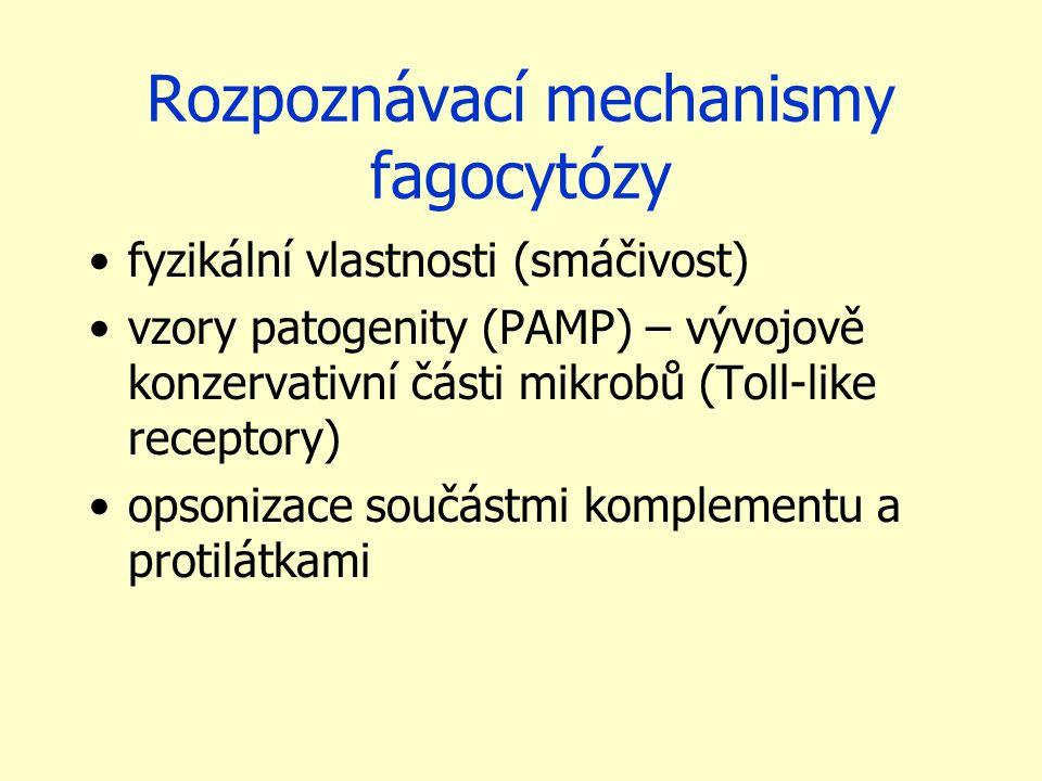 Rozpoznávací mechanismy fagocytózy fyzikální vlastnosti (smáčivost) vzory patogenity (PAMP) – vývojově konzervativní části mikrobů (Toll-like receptor