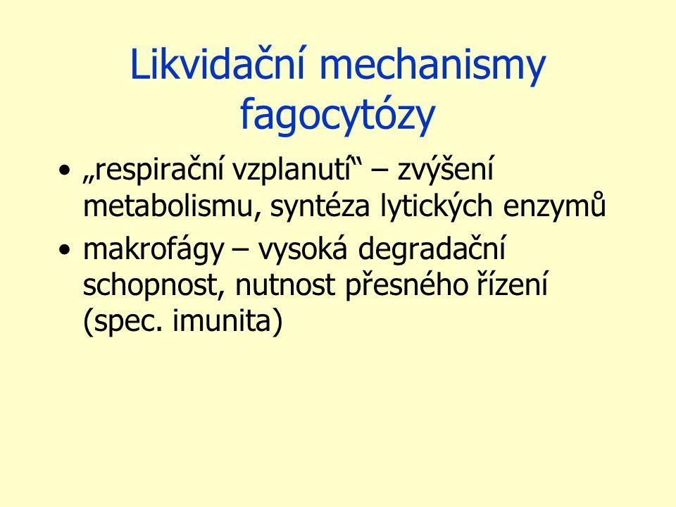 """Likvidační mechanismy fagocytózy """"respirační vzplanutí"""" – zvýšení metabolismu, syntéza lytických enzymů makrofágy – vysoká degradační schopnost, nutno"""