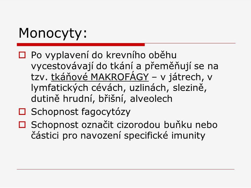 Monocyty:  Po vyplavení do krevního oběhu vycestovávají do tkání a přeměňují se na tzv.