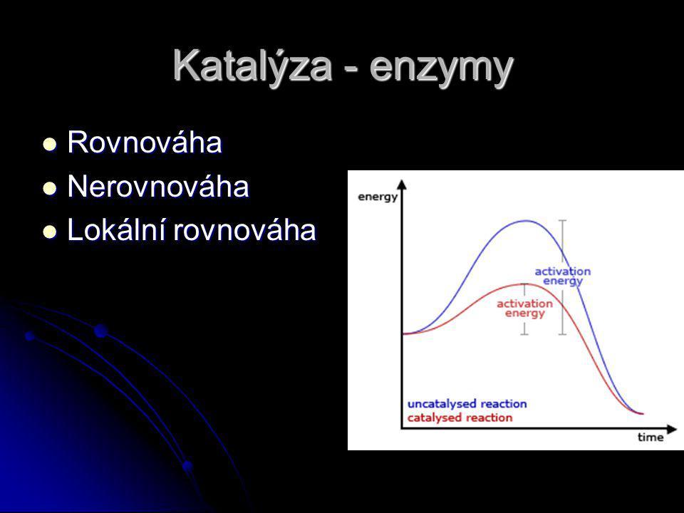 Katalýza - enzymy Rovnováha Rovnováha Nerovnováha Nerovnováha Lokální rovnováha Lokální rovnováha