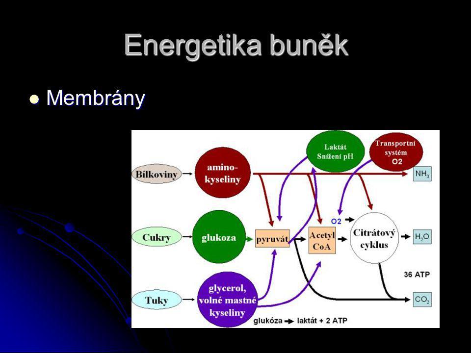 Energetika buněk Membrány Membrány