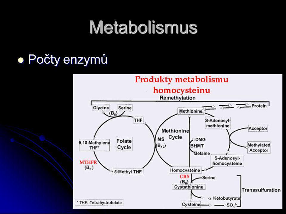 Metabolismus Počty enzymů Počty enzymů
