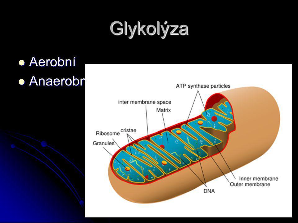 Glykolýza Aerobní Aerobní Anaerobní Anaerobní