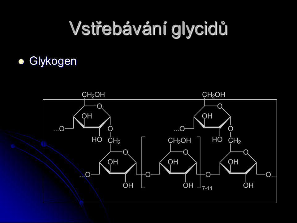 Vstřebávání glycidů Glykogen Glykogen
