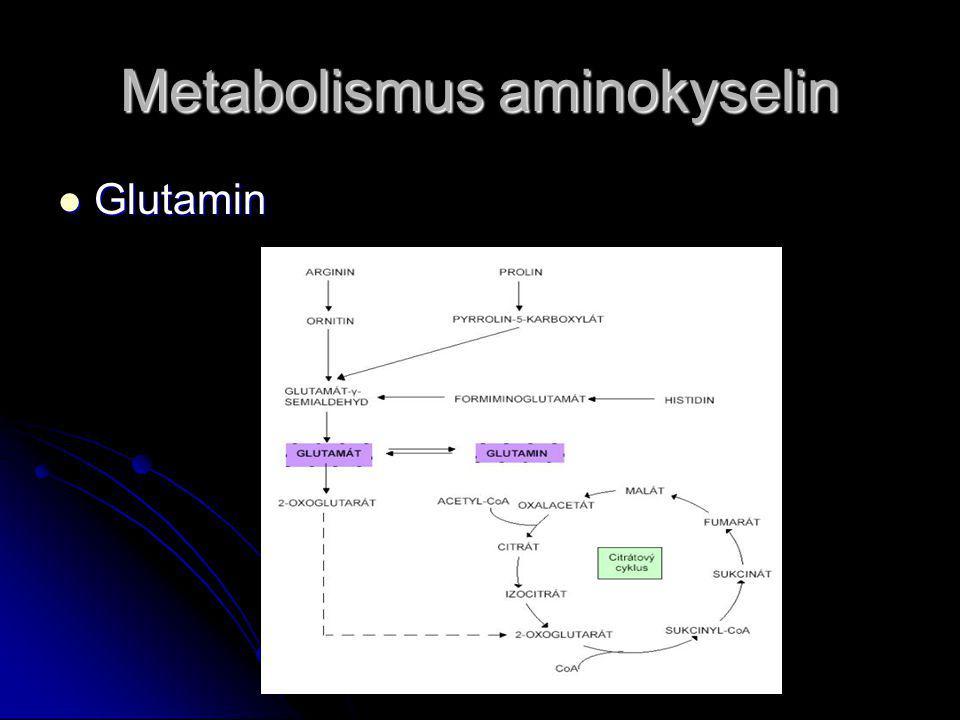 Metabolismus aminokyselin Glutamin Glutamin