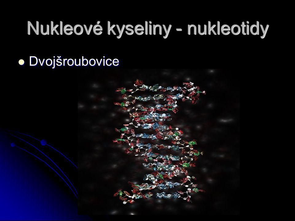Nukleové kyseliny - nukleotidy Dvojšroubovice Dvojšroubovice