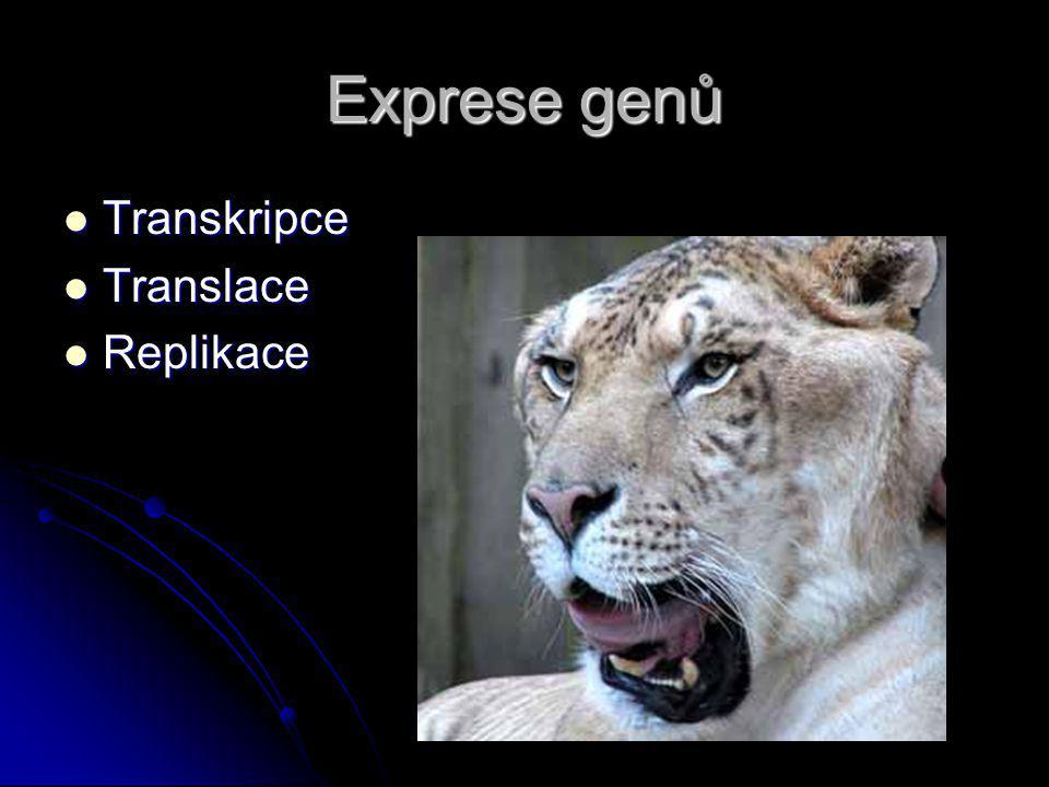 Exprese genů Transkripce Transkripce Translace Translace Replikace Replikace