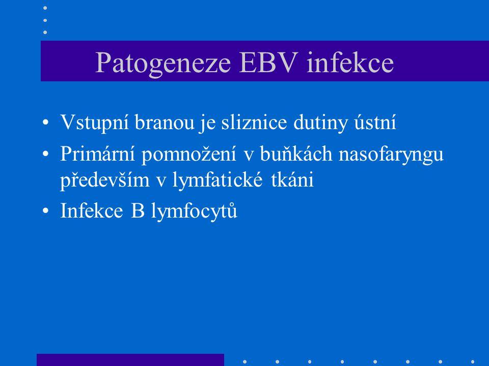 Patogeneze EBV infekce Vstupní branou je sliznice dutiny ústní Primární pomnožení v buňkách nasofaryngu především v lymfatické tkáni Infekce B lymfocy