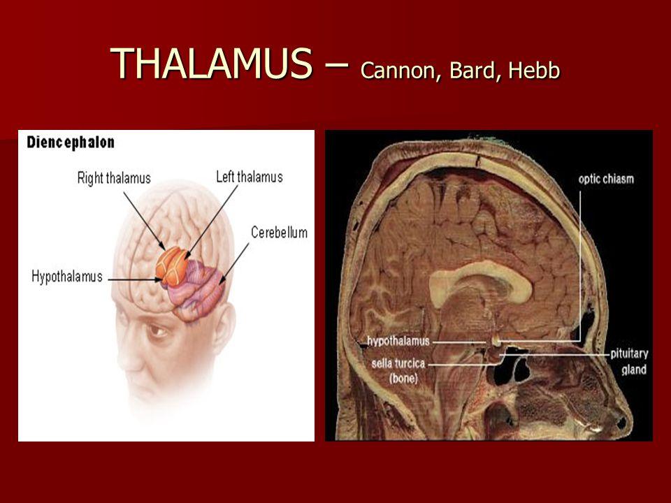 THALAMUS – Cannon, Bard, Hebb