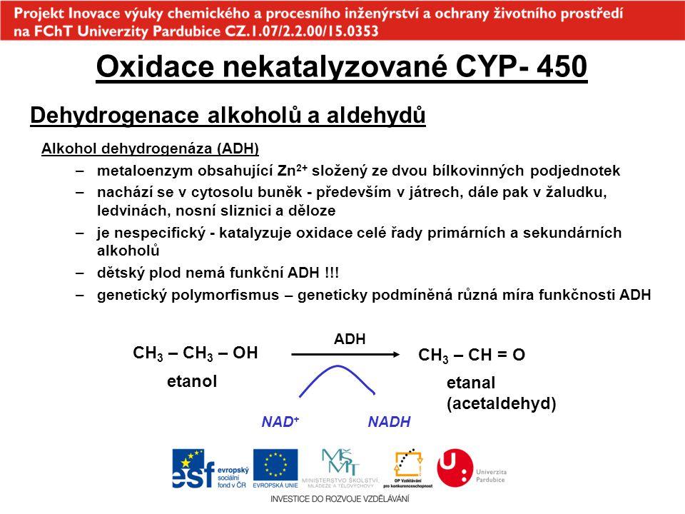Oxidace nekatalyzované CYP- 450 Dehydrogenace alkoholů a aldehydů Alkohol dehydrogenáza (ADH) –metaloenzym obsahující Zn 2+ složený ze dvou bílkovinný
