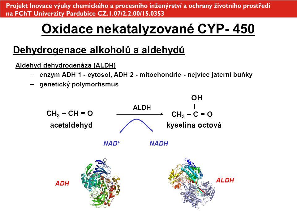 ALDH Oxidace nekatalyzované CYP- 450 Dehydrogenace alkoholů a aldehydů Aldehyd dehydrogenáza (ALDH) –enzym ADH 1 - cytosol, ADH 2 - mitochondrie - nej