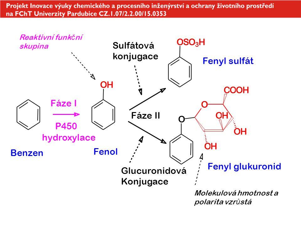 OH OSO 3 H O OH OH OH COOH O P450 hydroxylace Benzen Fenol Fáze II Sulfátová konjugace Glucuronidová Konjugace Fáze I Fenyl glukuronid Fenyl sulfát Re