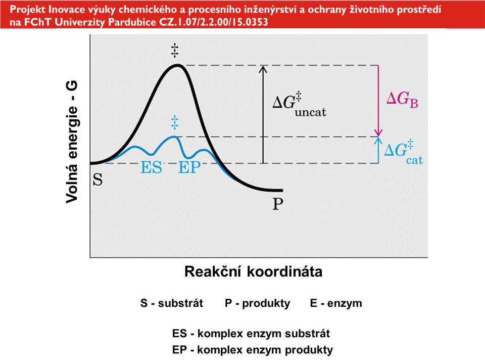 10 účastní se metabolizmu endogenních látek (živiny) i xenobiotik (toxické látky, léky) Cytochrom P- 450 membránově vázané hemoproteiny obsahující Fe 3+ nachází se hlavně v hladkém endoplazmatickém retikulu jaterních buněk (mikrozomální frakce jaterního homogenizátu) NADPH (nikotinamid-adenin-dinukleotid-fosfát) - koenzym, donor vodíku Oxygenace katalyzovaná cytochromem P- 450 XH + O 2 + NADPH + H + X-OH + H 2 O + NADP + cyt P-450 nespecifický enzym