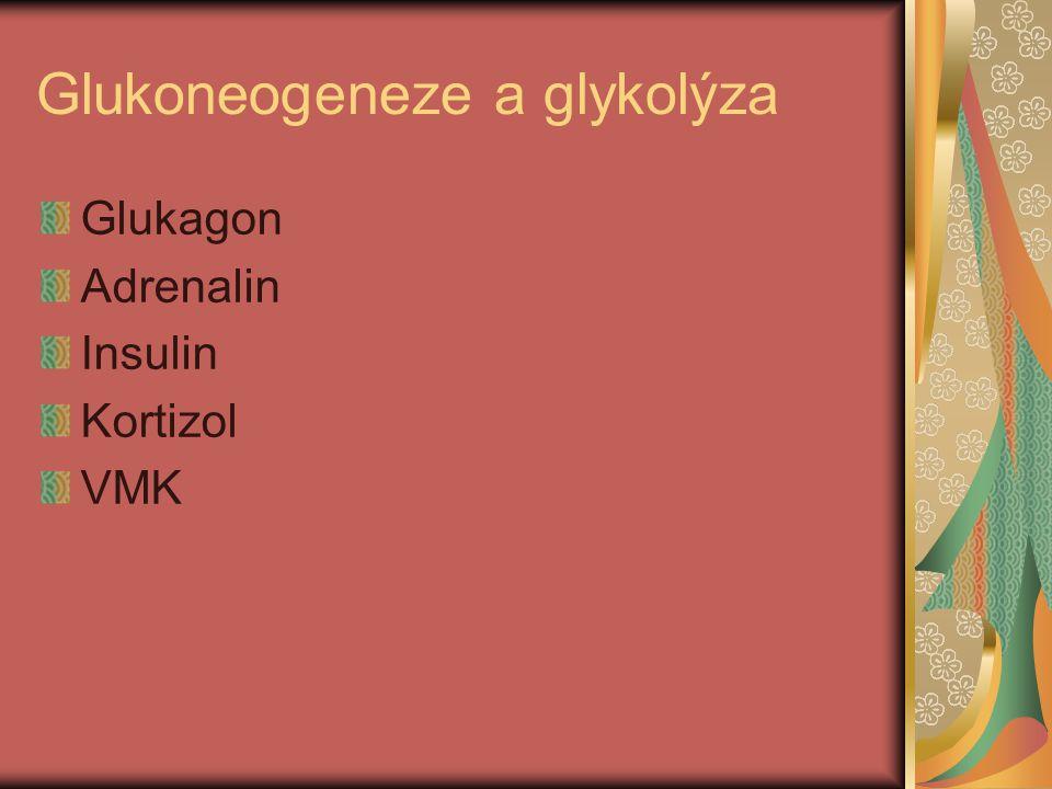 Glukoneogeneze a glykolýza Glukagon Adrenalin Insulin Kortizol VMK
