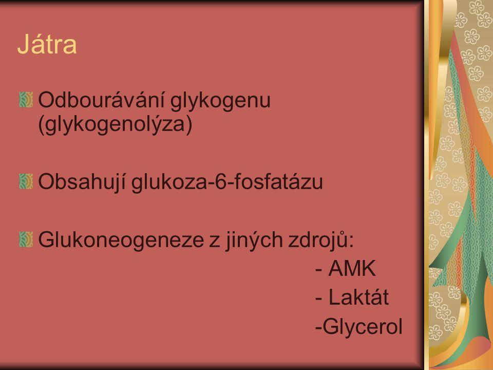 Játra Odbourávání glykogenu (glykogenolýza) Obsahují glukoza-6-fosfatázu Glukoneogeneze z jiných zdrojů: - AMK - Laktát -Glycerol