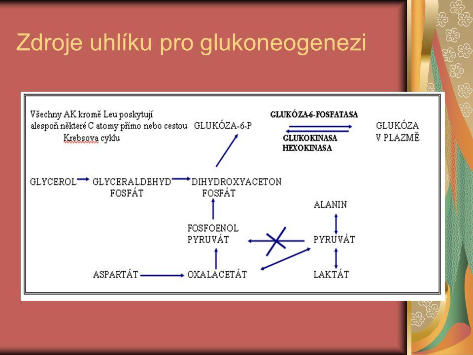 Zdroje uhlíku pro glukoneogenezi