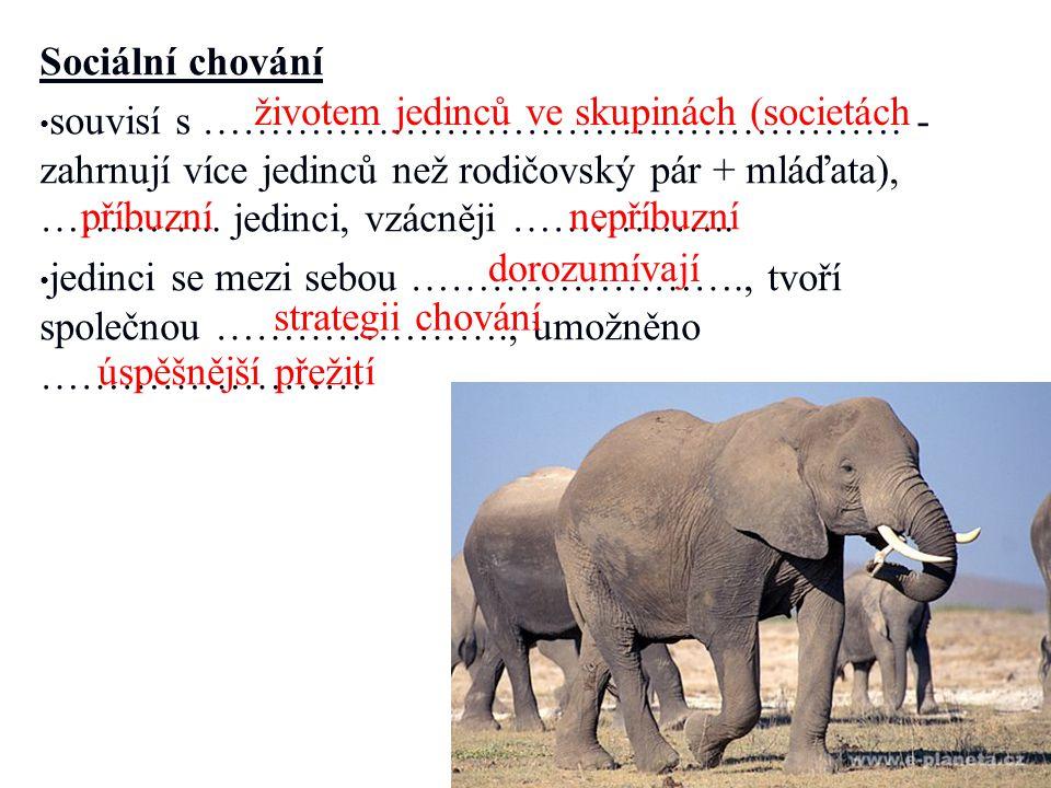 http://www.novinky.cz/koktejl/246274- americke-pobrezi-trapi-rudy-priliv-v-noci- paradoxne-zari-modre.html
