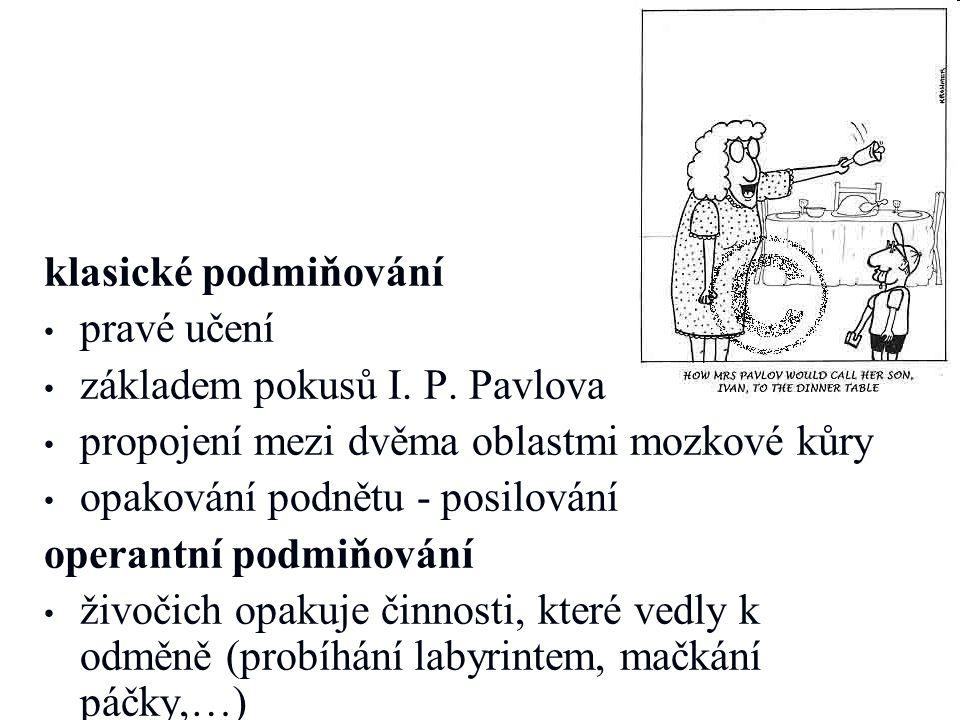 klasické podmiňování pravé učení základem pokusů I. P. Pavlova propojení mezi dvěma oblastmi mozkové kůry opakování podnětu - posilování operantní pod