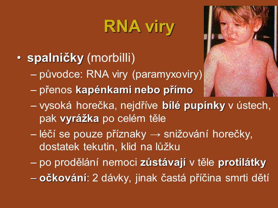 RNA viry klíšťová encefalitidaklíšťová encefalitida = zánět mozkových blan –původce: více virů čeledi Flaviviridae klíšťata, alimentárně –přenos: klíšťata, alimentárně (mléko) dezorientaceochrnutí degenerace NS –příznaky: podle závažnosti - jen bolesti hlavy a dezorientace, nebo až ochrnutí a degenerace NS očkování –léčba: symptomatická, očkování dočasně protilátky –po prodělání nemoci dočasně zůstávají v těle protilátky