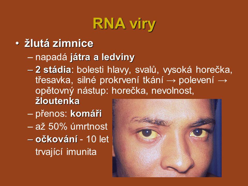 RNA viry zarděnkyzarděnky vyrážka –projevy: vyrážka (obličej → tělo), zánět zvětšené uzliny, teplota, zánět horních dýchacích cest kapénková –přenos: kapénková infekce –inkubační doba 2 - 3 týdny –očkování zůstávají protilátky –po prodělání nemoci v těle doživotně zůstávají protilátky –nebezpečné pro těhotné, respektive plod!