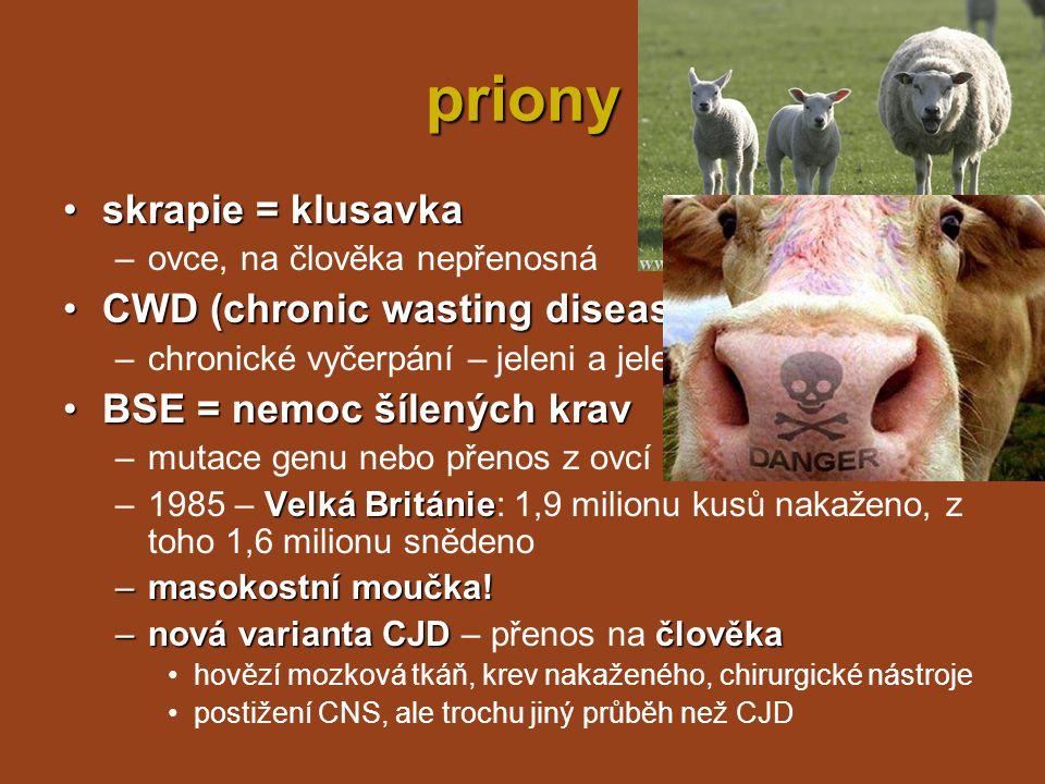 pojmy kapsid = bílkovinný obal viru virion = základní infekční částice v.