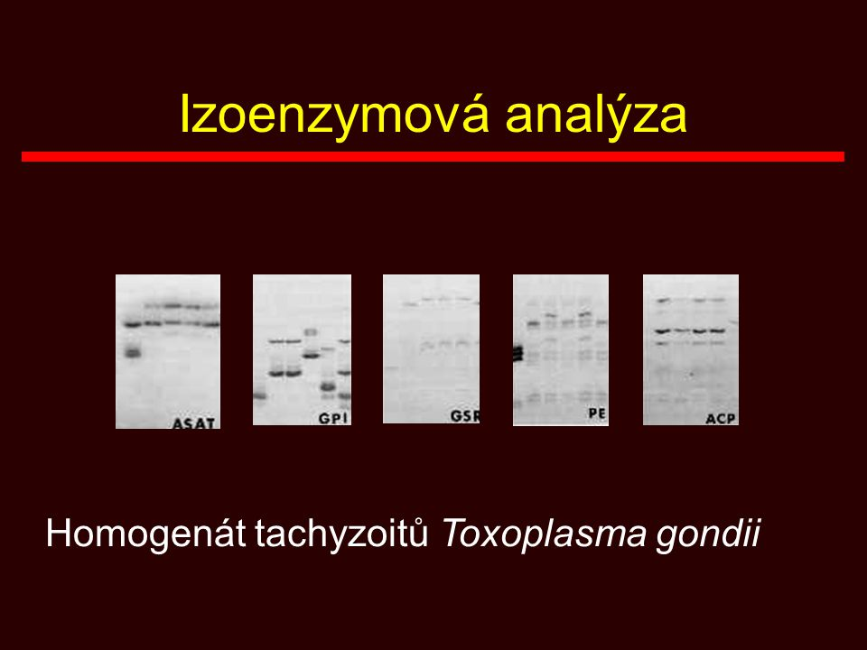 Izoenzymová analýza Homogenát tachyzoitů Toxoplasma gondii