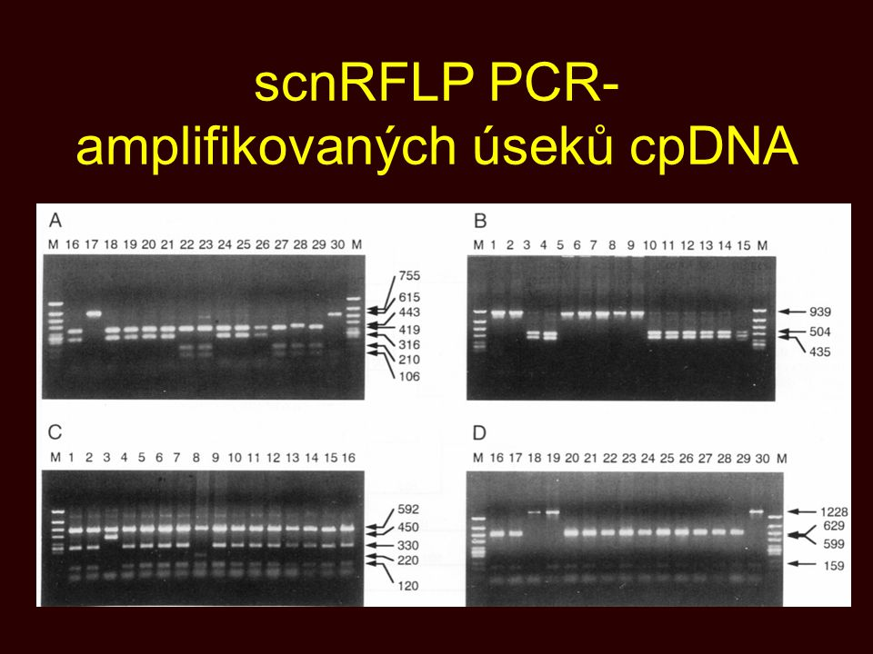 scnRFLP PCR- amplifikovaných úseků cpDNA