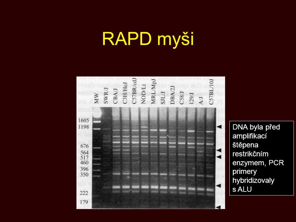 RAPD myši DNA byla před amplifikací štěpena restrikčním enzymem, PCR primery hybridizovaly s ALU