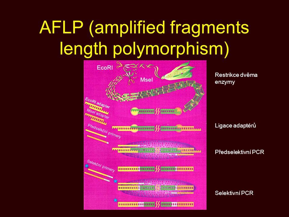 AFLP (amplified fragments length polymorphism) MseI EcoRI MseI adapter Předselkční primery EcoRI adapter Selekční primery Restrikce dvěma enzymy Ligac