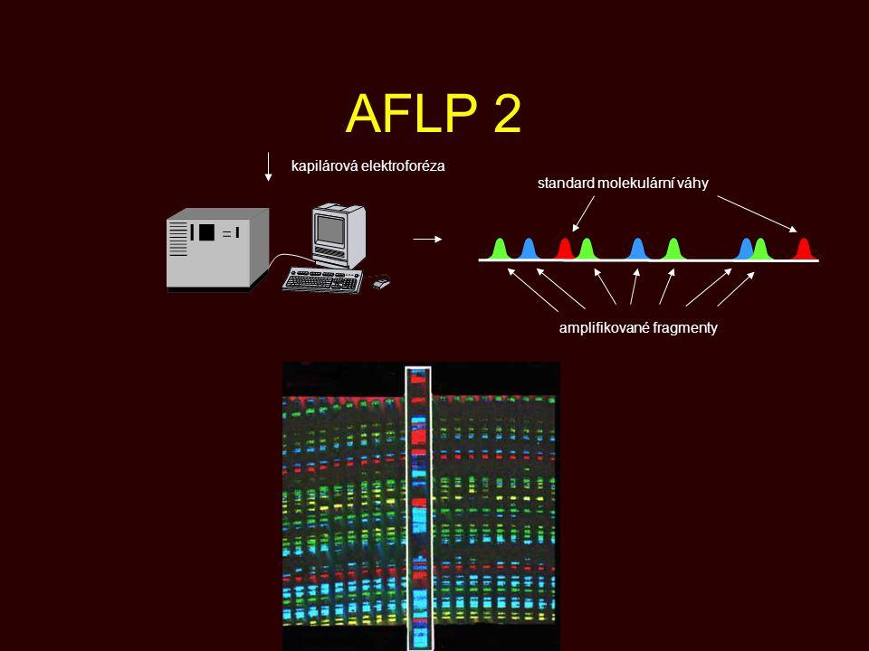 AFLP 2 kapilárová elektroforéza standard molekulární váhy amplifikované fragmenty
