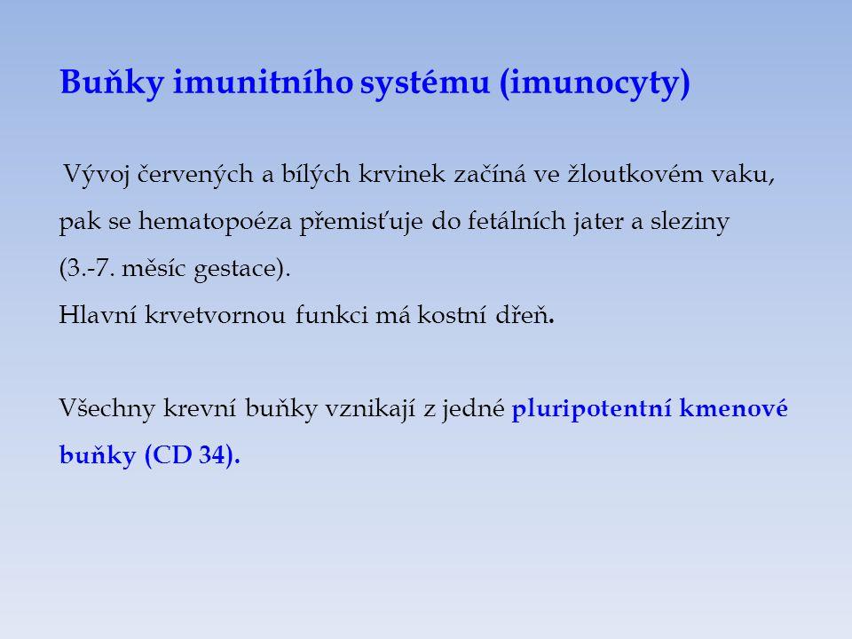 Buňky imunitního systému (imunocyty) Vývoj červených a bílých krvinek začíná ve žloutkovém vaku, pak se hematopoéza přemisťuje do fetálních jater a sleziny (3.-7.