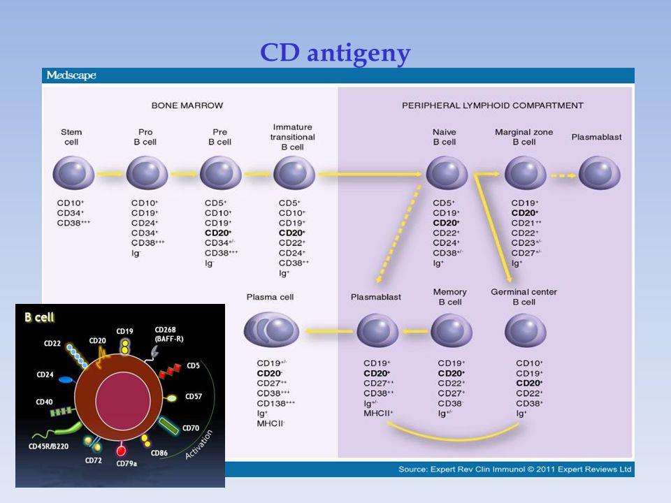 CD antigeny