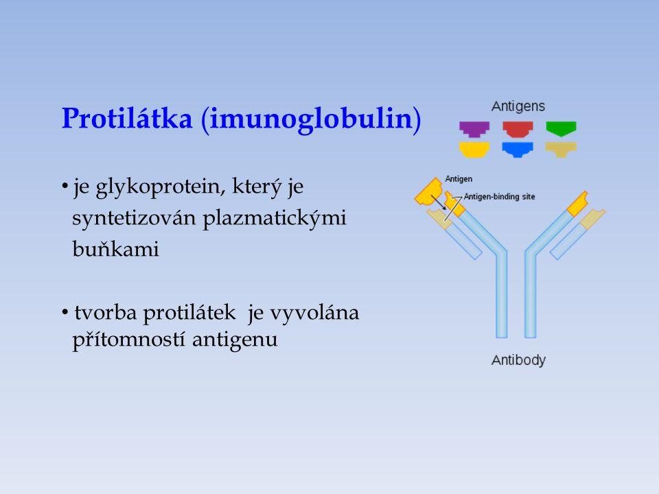 Protilátka ( imunoglobulin ) je glykoprotein, který je syntetizován plazmatickými buňkami tvorba protilátek je vyvolána přítomností antigenu