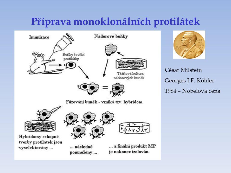 Příprava monoklonálních protilátek César Milstein Georges J.F. Kőhler 1984 – Nobelova cena