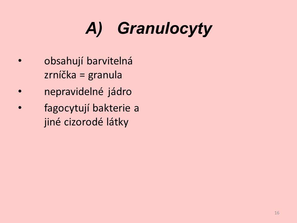 A) Granulocyty obsahují barvitelná zrníčka = granula nepravidelné jádro fagocytují bakterie a jiné cizorodé látky 16