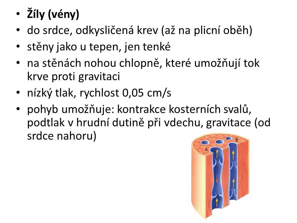 Žíly (vény) do srdce, odkysličená krev (až na plicní oběh) stěny jako u tepen, jen tenké na stěnách nohou chlopně, které umožňují tok krve proti gravi
