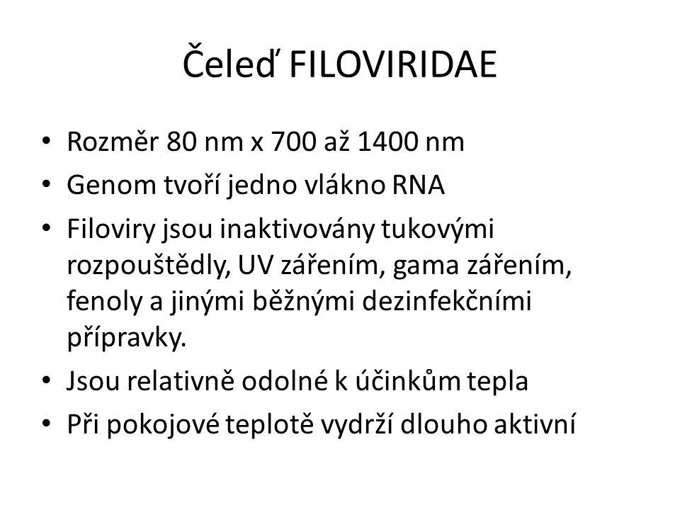 Čeleď FILOVIRIDAE Rozměr 80 nm x 700 až 1400 nm Genom tvoří jedno vlákno RNA Filoviry jsou inaktivovány tukovými rozpouštědly, UV zářením, gama záření