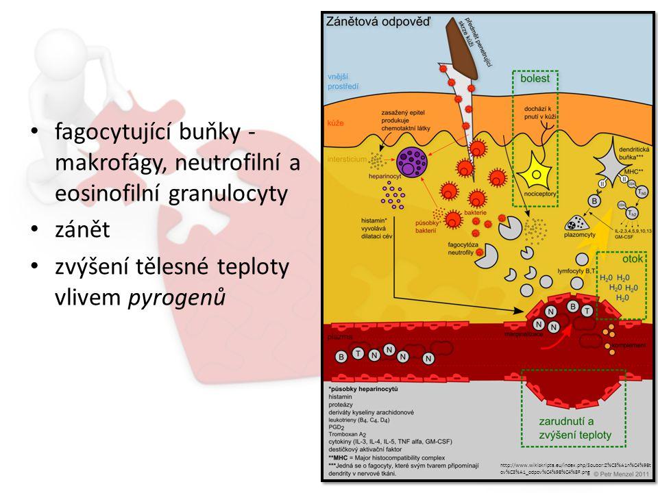 fagocytující buňky - makrofágy, neutrofilní a eosinofilní granulocyty zánět zvýšení tělesné teploty vlivem pyrogenů http://www.wikiskripta.eu/index.php/Soubor:Z%C3%A1n%C4%9Bt ov%C3%A1_odpov%C4%9B%C4%8F.png