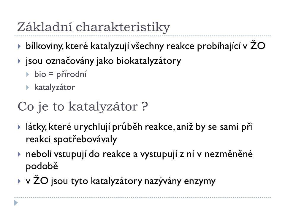 Základní charakteristiky  bílkoviny, které katalyzují všechny reakce probíhající v ŽO  jsou označovány jako biokatalyzátory  bio = přírodní  katal